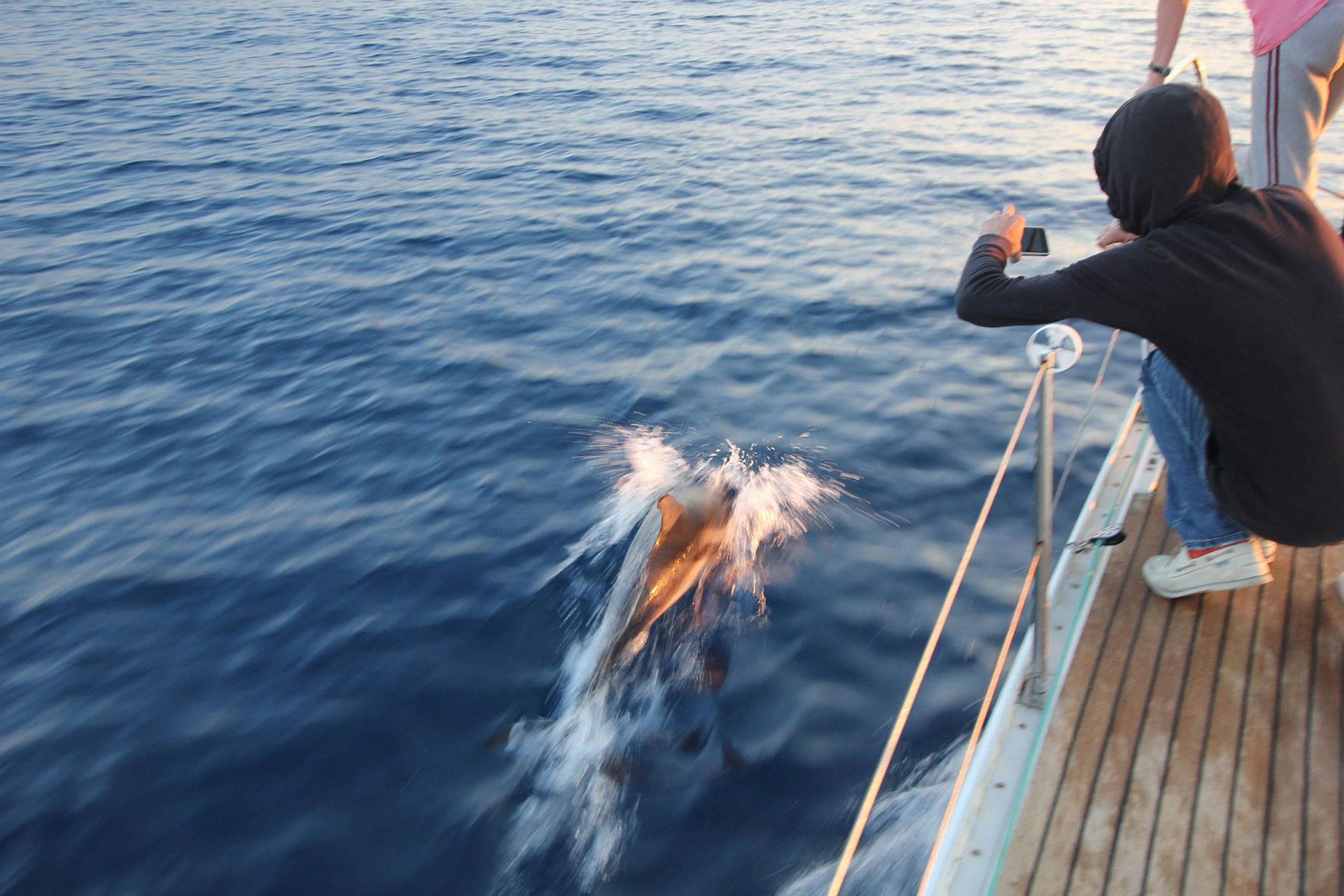 delfino-escursione-in-barca